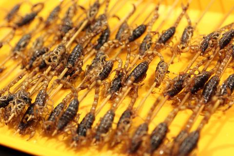 Výsledek obrázku pro jedlý hmyz